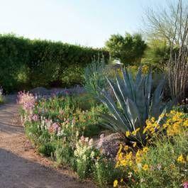 Growing Wildflowers - Phoenix Home & Garden front patio area?
