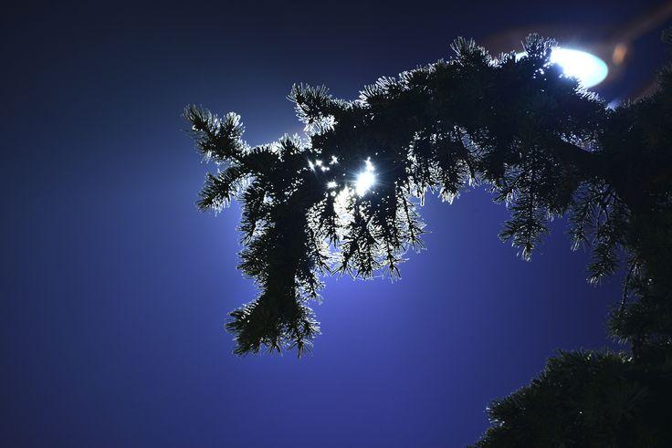 Light tree by Nastase Mihail on 500px