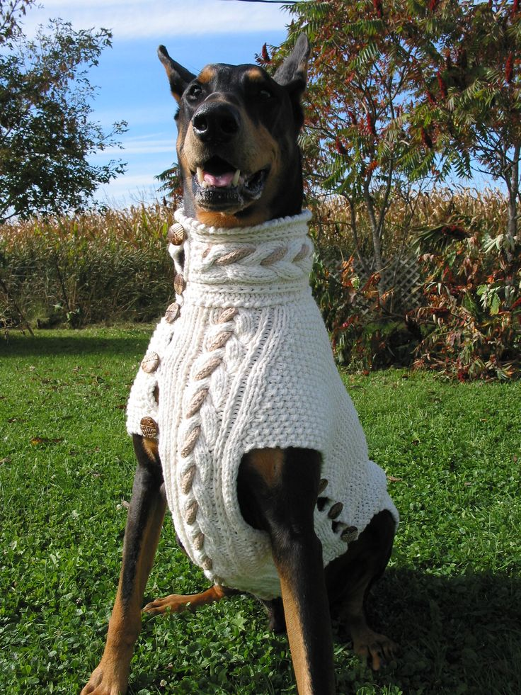 Big Dog Wearing Sweater 53 best DOGS an...