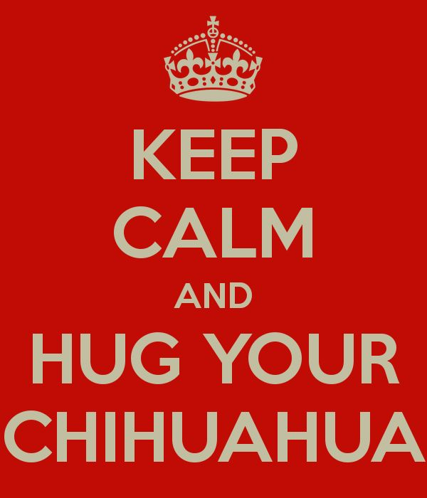 KEEP CALM AND HUG YOUR CHIHUAHUA