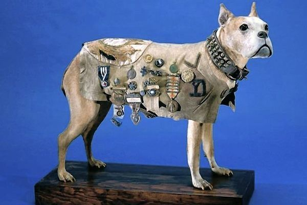 The most decorated dog of WWI is preserved in the Smithsonian for his heroism.