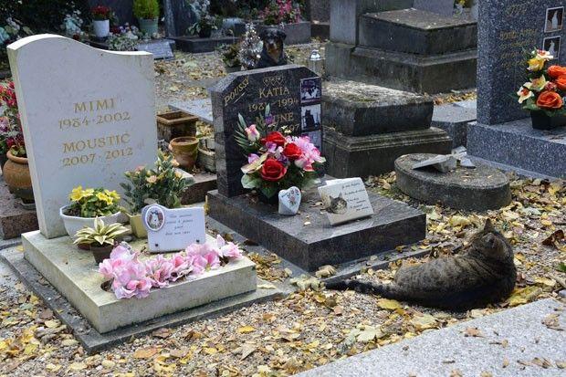 Gato descansa em túmulo de felino em cemitério de animais na França http://g1.globo.com/planeta-bizarro/noticia/2013/10/gato-descansa-em-tumulo-de-felino-em-cemiterio-de-animais-na-franca.html