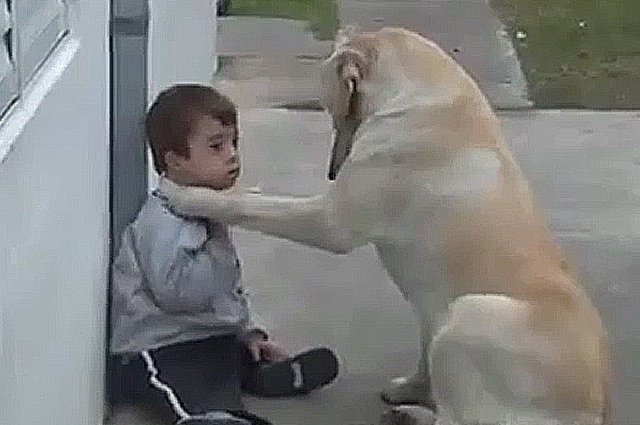 Enternecedor video de perro que cuida y mima a niño con síndrome de Down