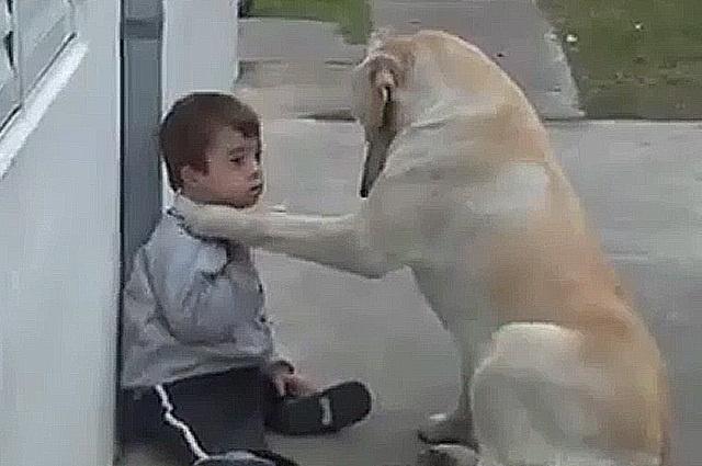 Enternecedor video de perro que cuida y mima a niño con síndrome de Down