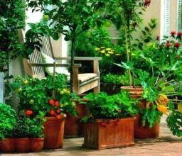 Что можно выращивать в контейнерах - Садоводка