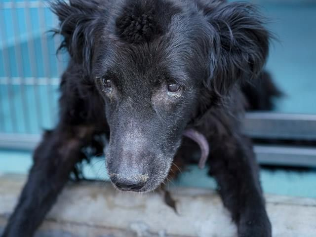 Family Surrendered 14 Year Old Dog For Being Too Old Old Dogs Save A Dog Dogs