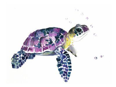 Sköldpaddor - Posters på AllPosters.se