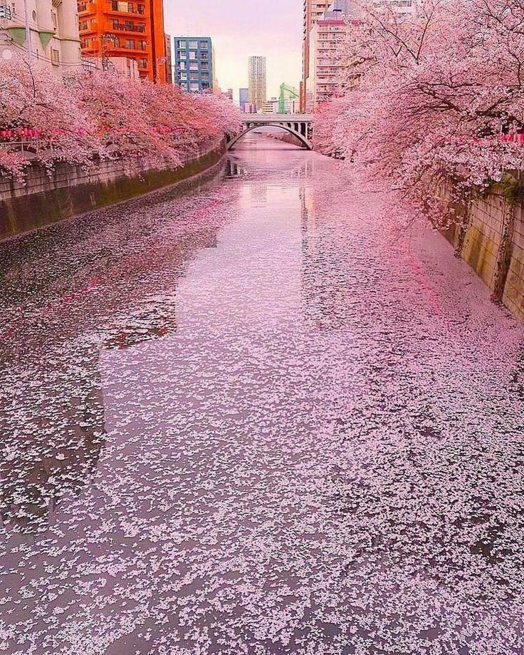 all the pink florals – #cherryblossom #florals #pink