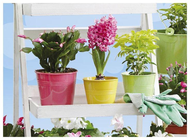 De kleur in jouw tuin komt niet alleen van allerlei vrolijke bloemen, maar ook van deze kleurrijke metalen bloempotjes. Zo straalt je tuin helemaal lente uit!