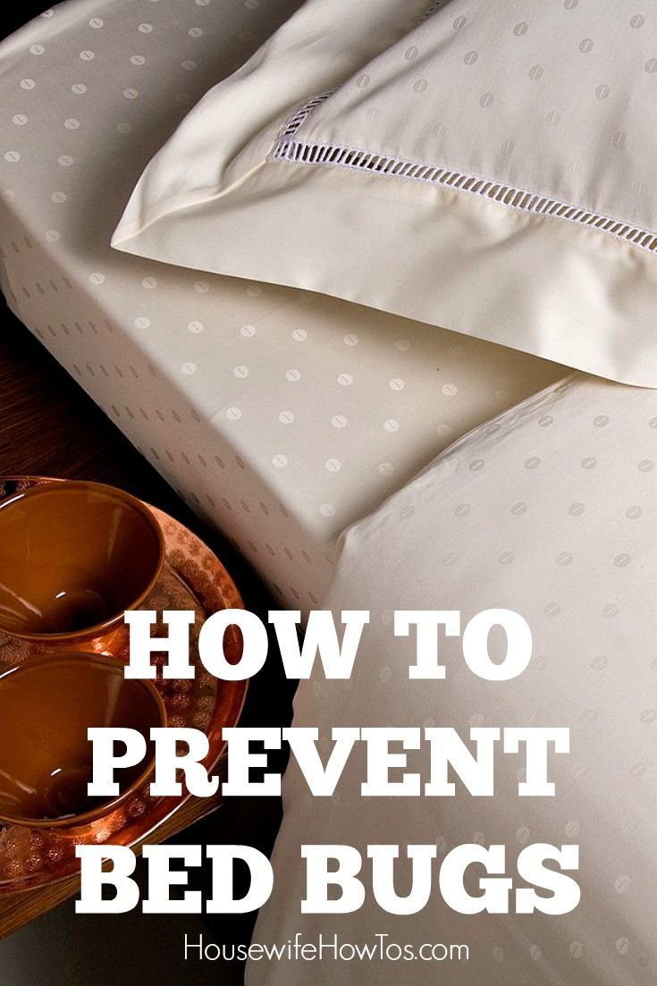 How To Prevent Bed Bugs- Steps to keep from bringing them into your home where they bite your family and can cost over $1,000 to get rid of!