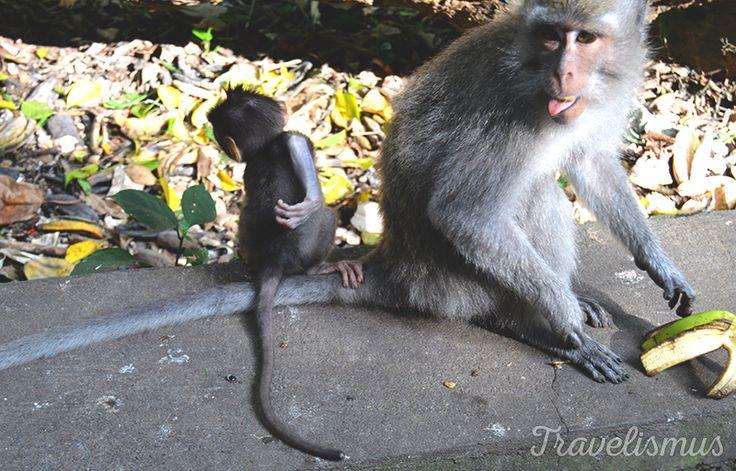 Mum and baby in Sacred Monkey Forest, Ubud - Bali