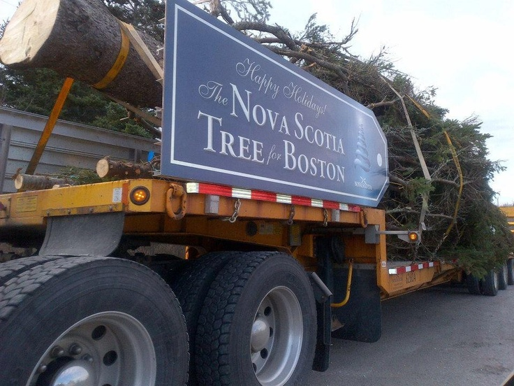 Christmas Tree to Boston every year. Our thanks for help after the halifax Explosion