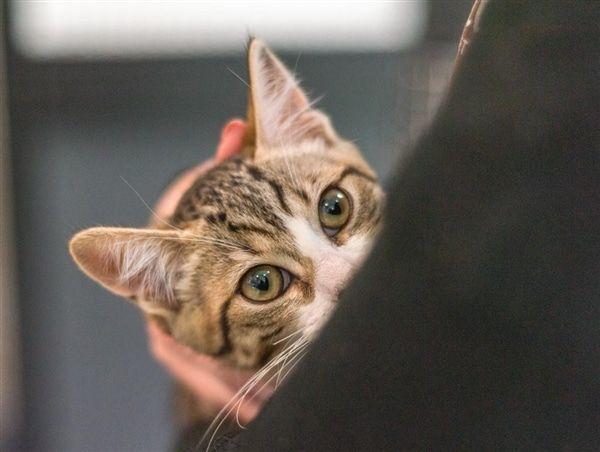 Ava RSPCA Adopt a pet Pets, Animals, Adoption