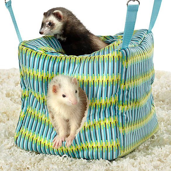 All Living Things Ferret Cube Small Pets Pets Pocket Pet