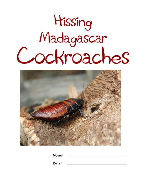 FREE Madagascar Hissing Cockroach Lapbook