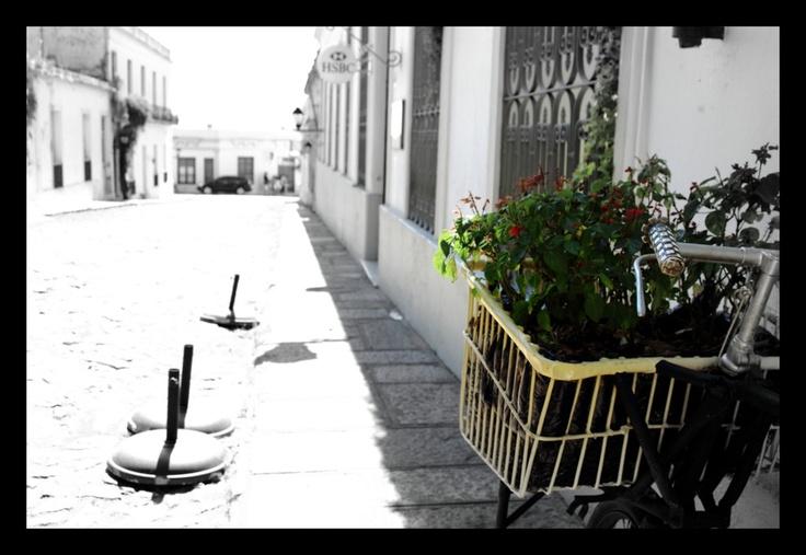 Colonia del Sacramento. Bicicleta florero.