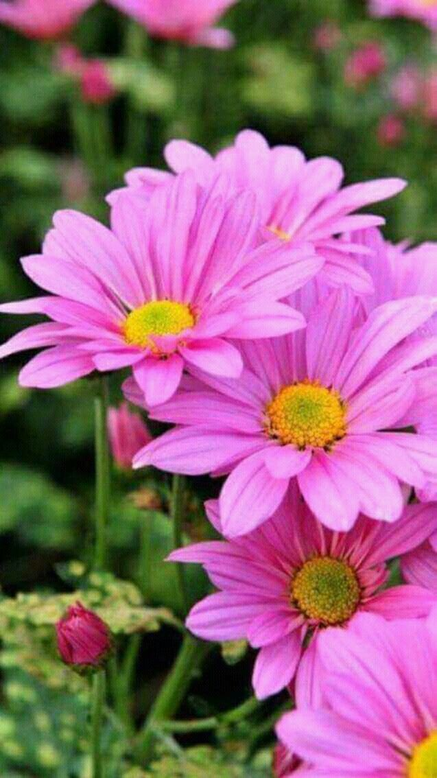 Meer dan 1000 ideen over Flores Preciosas op Pinterest Prachtige