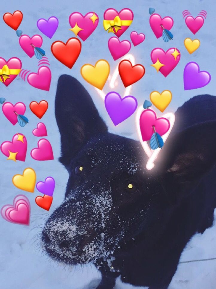 Cute Wallpapers With Emojis Heart Emoji Meme Dog Bujo Prints Heart Emoji Cute