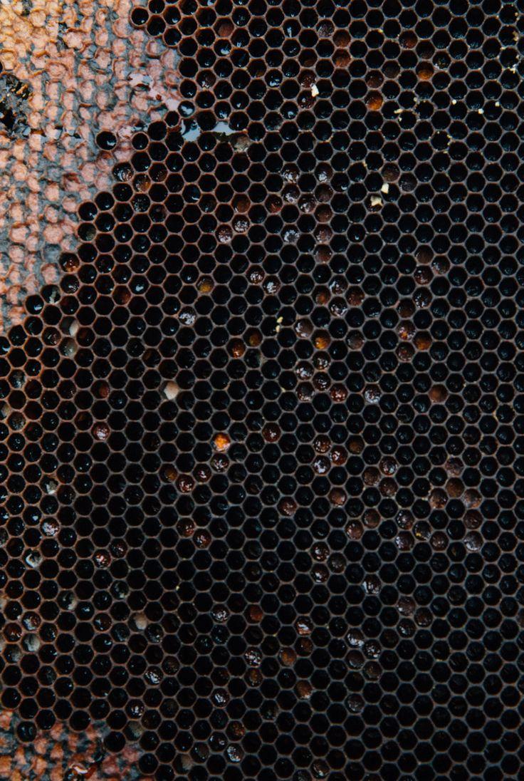 Honeycomb Ireland Toronto Travel Photographers - Suech and Beck