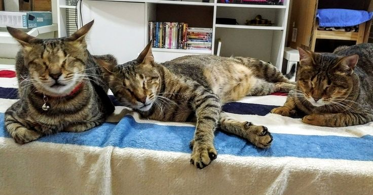 Nobody Wanted These 3 Blind Cats, Until This Woman Decided To Adopt Them | Bored Panda