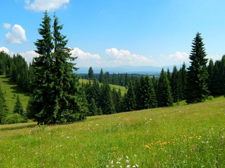 Pasul Tihuta, Romania