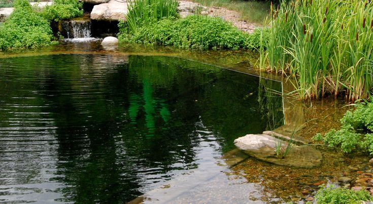 About Natural Swimming Pools/Ponds - TOTAL HABITAT