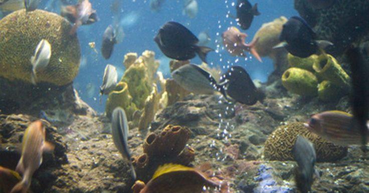 Como fazer a água de um aquário mais alcalina. Manter um pH adequado para peixes de aquário é importante para a sobrevivência deles. Muitos prosperam em um tipo mais alcalino (ou seja, têm um pH mais alto) de água. A alcalinidade da água é também ligada à sua dureza. Em diversos casos, a água de torneira não é adequada para a sobrevivência do peixe. Para alcançar uma mais alcalina, muitos ...