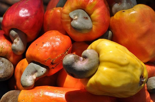 Haiti's cashews (Noir), with such brilliant colors can be use in rice or meat recipes or roast alone & enjoy.