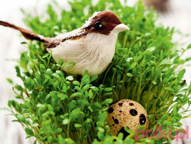 Jak każe tradycja, łączka z rzeżuchy lub ziaren powinna stać na stole podczas wielkanocnego śniadania. Wśród młodych siewek możemy posadzić baranka, ptaszka lub kwiatki.