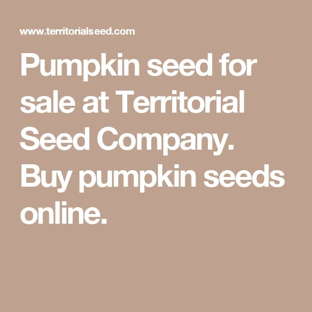 Pumpkin seed for sale at Territorial Seed Company. Buy pumpkin seeds online.