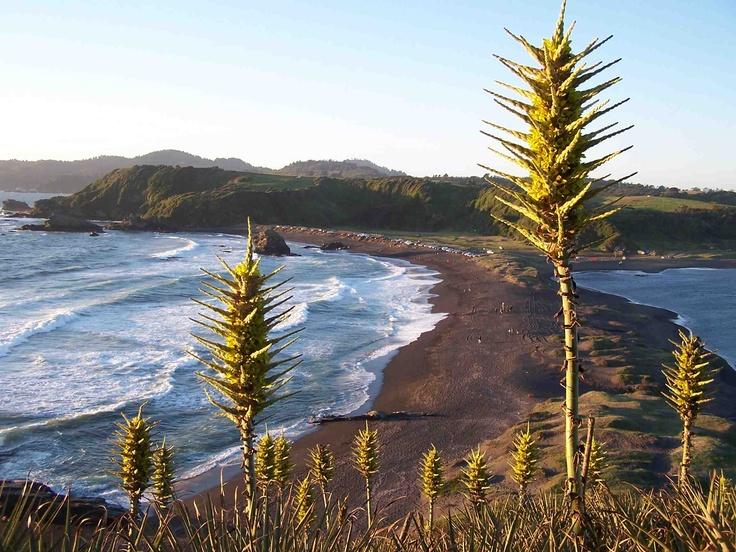Desembocadura del río Bío-Bío (Concepción, Chile)