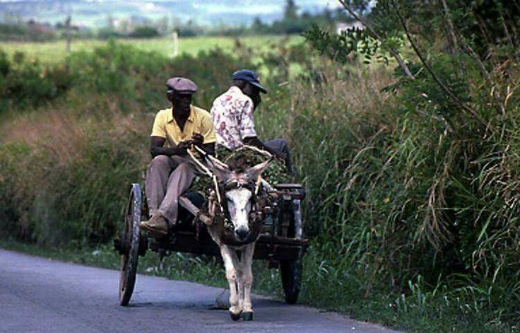 Donkey cart transportation