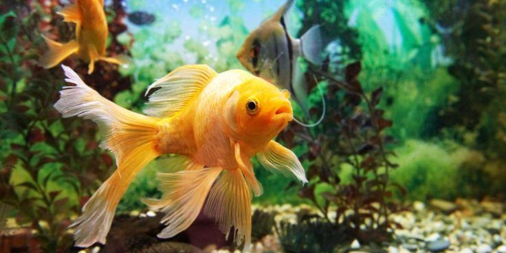 Vente de poissons d'eau douce Gizia Vente de poissons d'eau douce Lons-le-Saunier