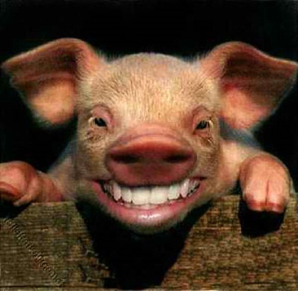 5 Dirty Facts You Didn't Know About Pork Barrel http://www.filipiknow.net/pork-barrel-facts/