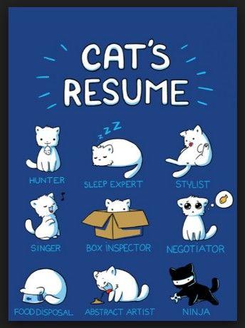 Cat's resume)!  #funny #cat