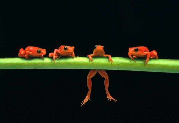 Top 30 National Geographic Frog Pictures Of All Time | Daily News Dig