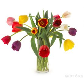 Enjoy Spring all year long with beautiful California-grown fresh cut Tulips! Bulk Tulips are available in a wide variety of colors from numerous flower farms in California. Fun and vibrant colors make the tulips 'pop' in virtually any arrangement! Brighten up your wedding flowers with wholesale Tulips from The Grower's Box.