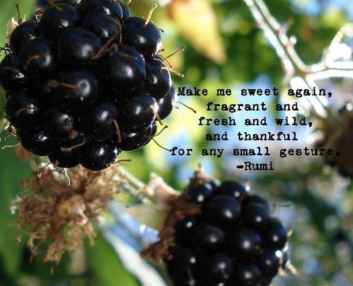Citaten Rumi Rumit : Beste afbeeldingen van rumi my beautiful