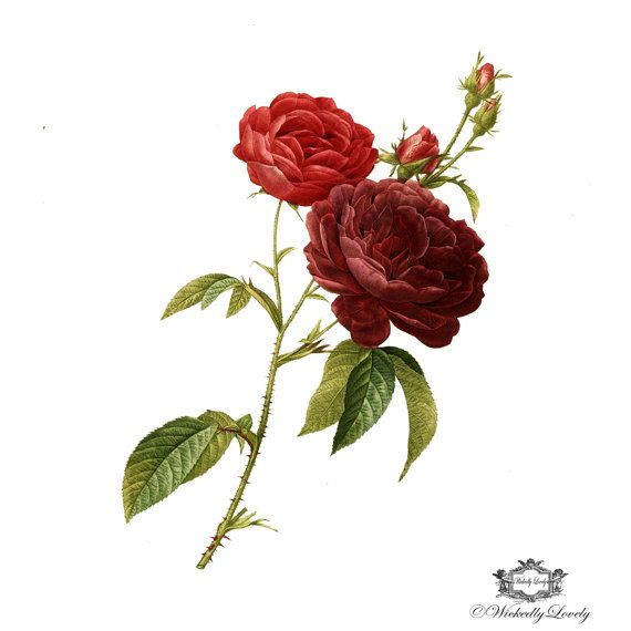Roses are Red, Red roses tattoo,  Vintage tattoo, Fine Art Rose, floral tattoo, Body Art, Wickedly Lovely Skin Art Temporary Tattoo