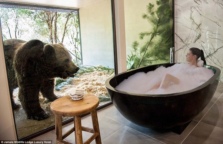 Jamala Wildlife Lodge, in Canberra, Australia, allows guests to wake up next to lions and ...