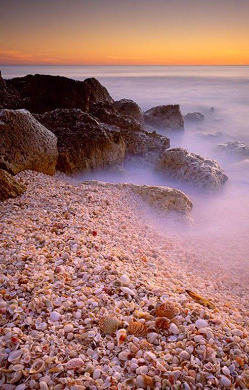 1000+ Images About Sanibel Island On Pinterest