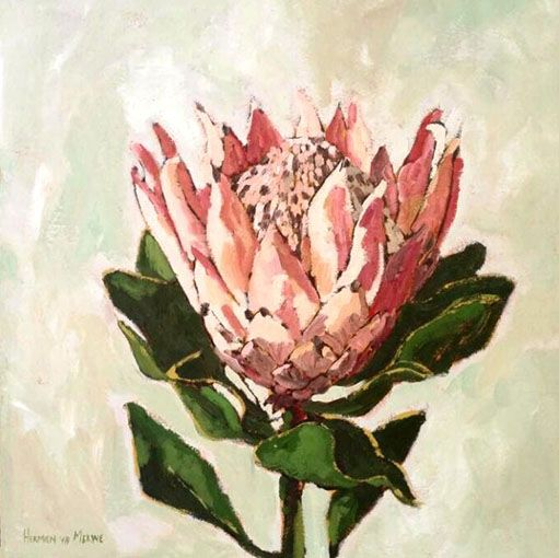 Title: Stellendale Protea 1 Medium: Oil paint on canvas Size: 500mm x 500mm