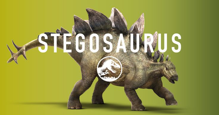 The Stegosaurus had 17 bony plates along its spine and a powerful spiked tail. Both could inspire fear but were used primarily for protection. The Stegosaurus' front legs are lower than its rear to make foraging for plants easier.