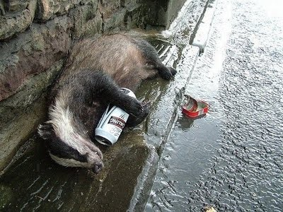 how to kill badger don& 39