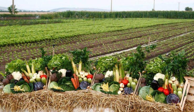 Lădiţa cu Legume din Fermă, pentru Braşoveni http://platferma.ro/ladita-cu-legume-din-ferma-pentru-brasoveni/