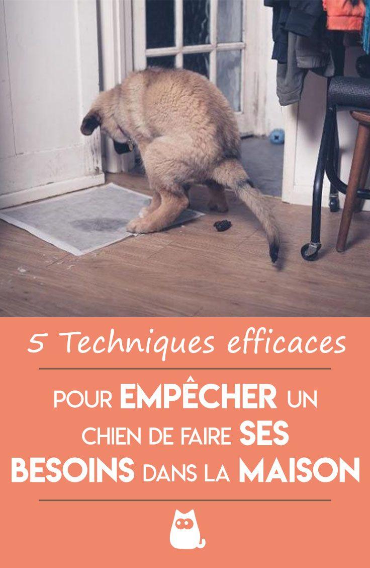 Comment Empecher Un Chien De Faire Ses Besoins Dans La Maison Astuces D Education Canine Chien Repulsif Chien
