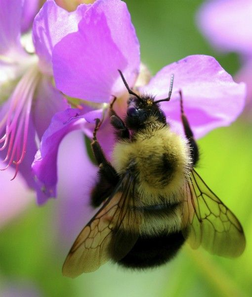 10 Animals That Pollinate Flowers