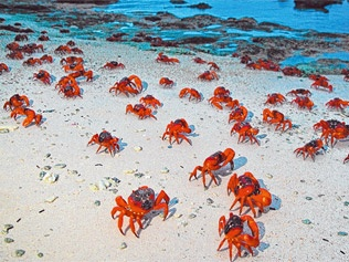 CHRISTMAS ISLAND -The Island of Red Crabs