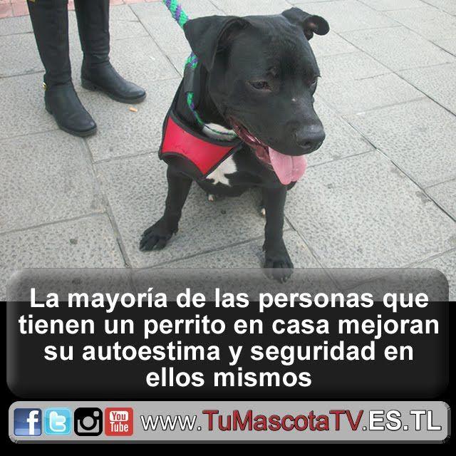 #perrosygatos #migato #miperro @WebFacilparaTi