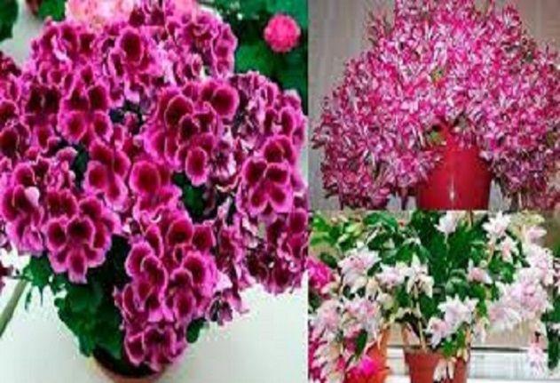 Jak Uratowac Ciete Kwiaty House Of Solutions